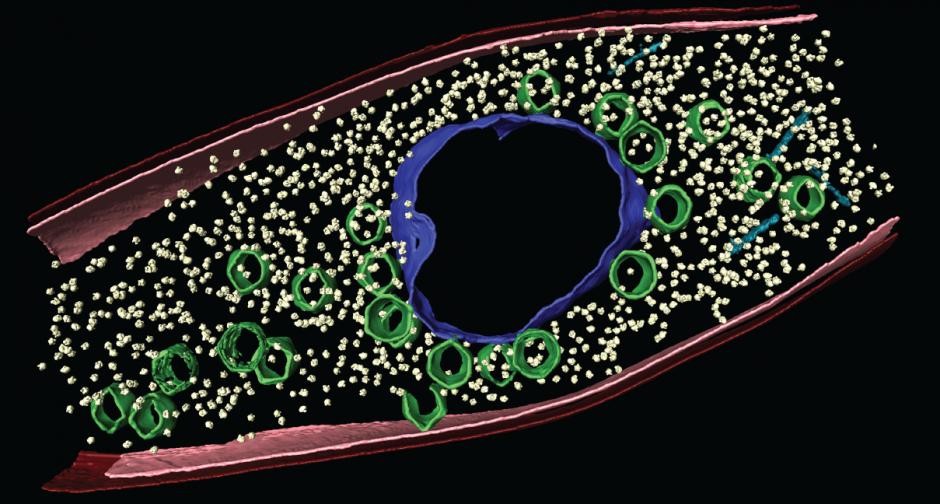 phagenucleus